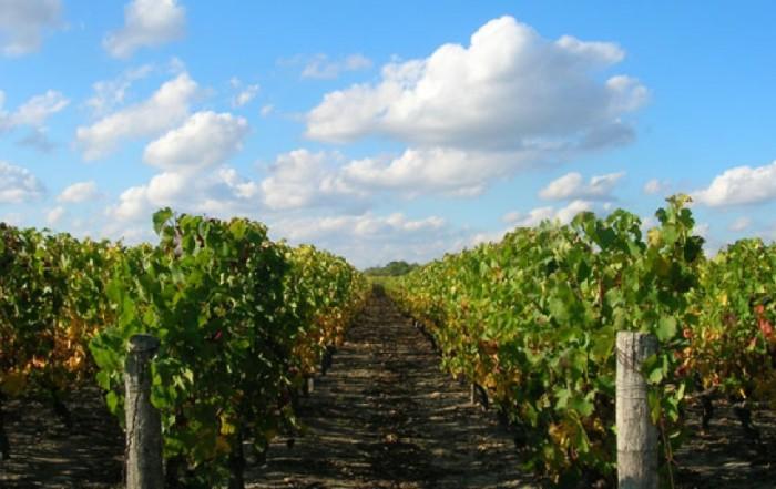 Touraine-Oisly-Lionel-Gosseaume-domaine-de-pierre-vignes